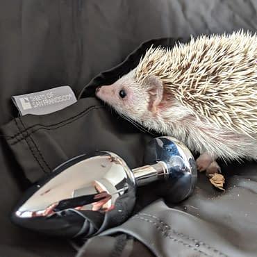 Diaries of a Hedgehog – Hai Peeps