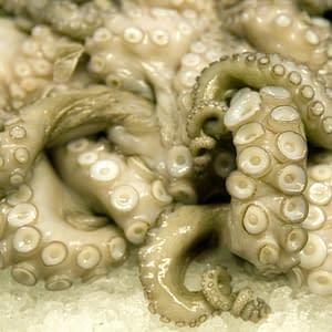 A mass of octopus tentacles